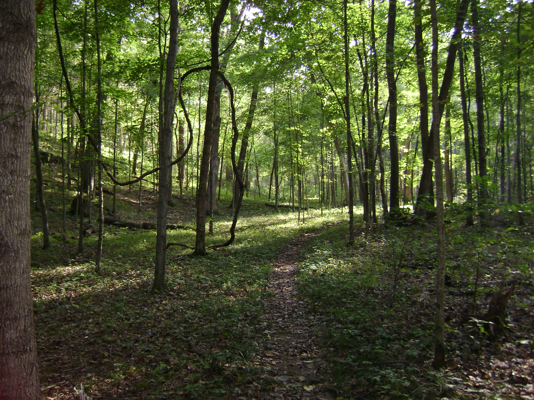 park trails missouri state parks wilderness trail the longest trail in the park gives users an opportunity to experience great geological and natural features