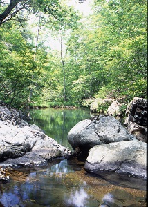 large rocks and trees line the creek bank