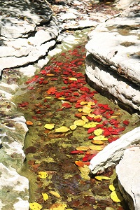 red and yellow leaves floating in water between rock ledges
