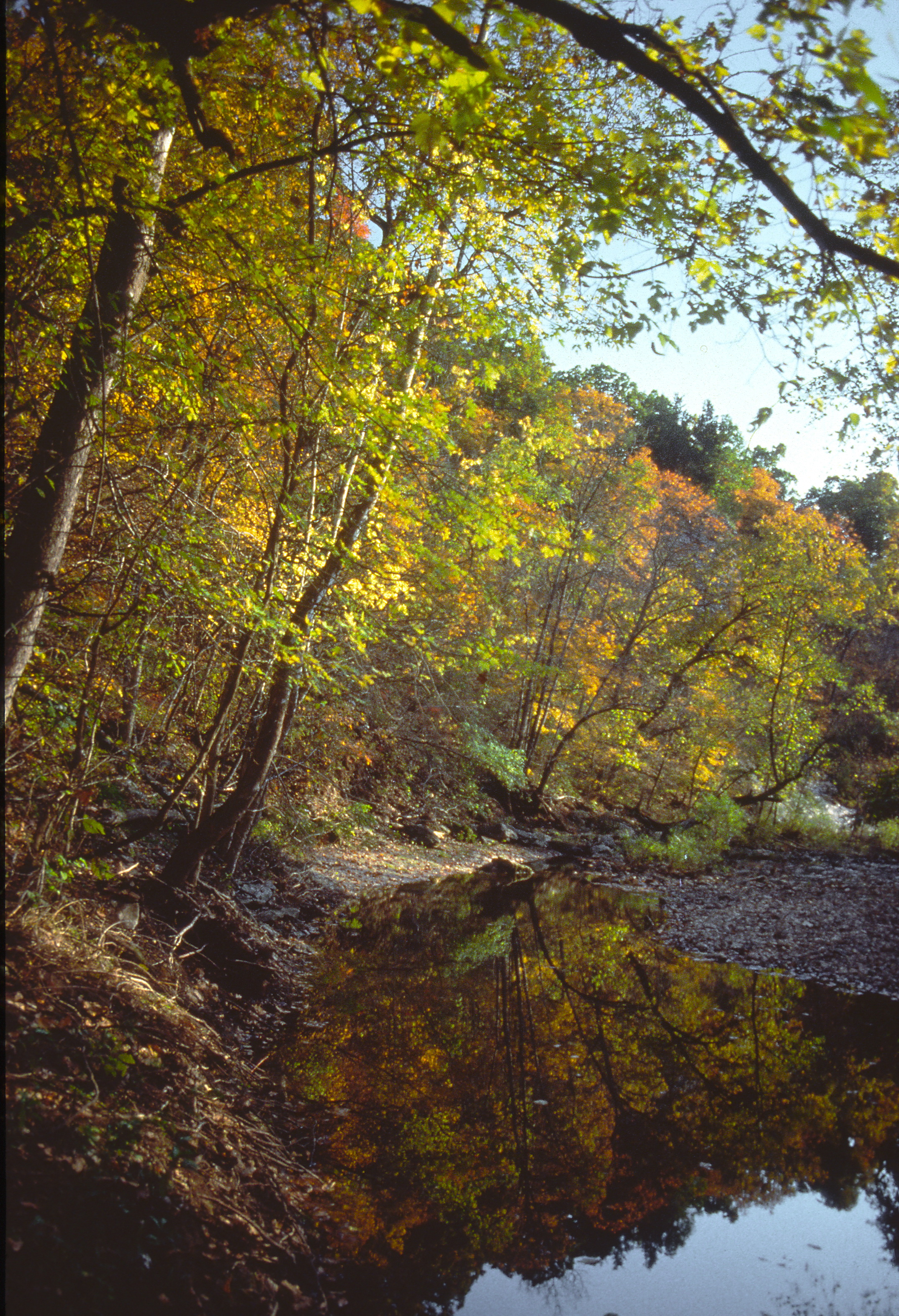 fall color trees line the stream bank