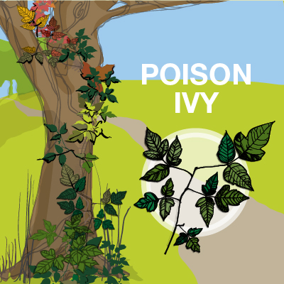 an illustration of poison ivy leaves