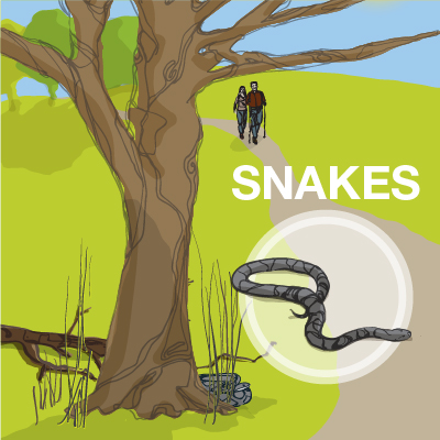 an illustration of a snake on a trail