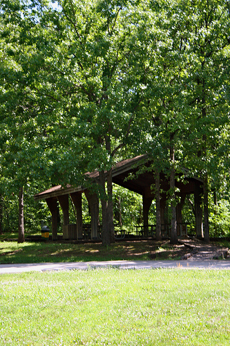 a picnic shelter under tall trees