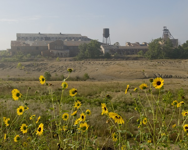 yellow wildflowers in the foreground with the mining complex in the background