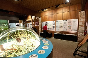 interior dome nature display