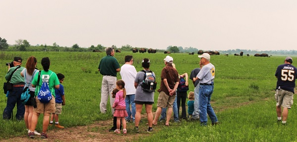 a naturalist leads a hike to see the bison