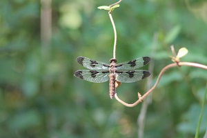 a dragon fly on a plant stem