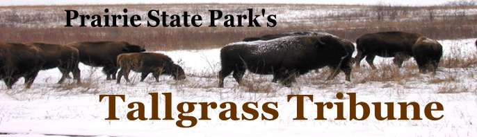 Tallgrass Tribune logo with bison on a snow-covered prairie