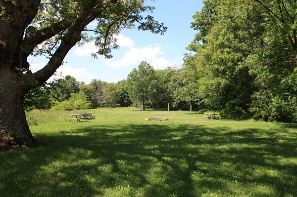 a few picnic tables scattered in an open area surrounded by trees