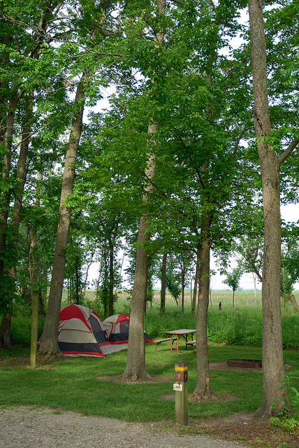 two tents set up under tall trees in the campground