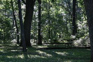 picnic table under large shade trees